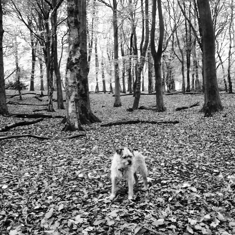 Heaton Park woods Autumn 2014
