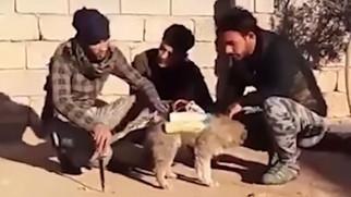 IS, 폭발물 부착 '자살 개'로 테러 시도