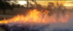 Screen Shot 2020-02-03 at 1.42.59 pm.jpg