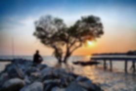 Tree_BigStock.jpg
