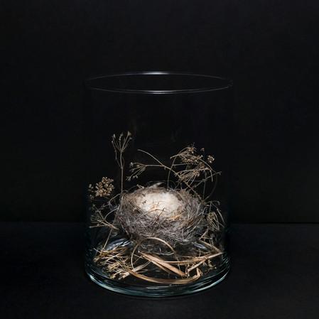 6655-isolationflorabirdsnestnoblur.jpg