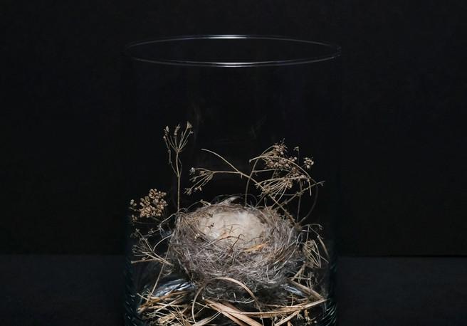 6655-birdsnestIsolationFlora.jpg