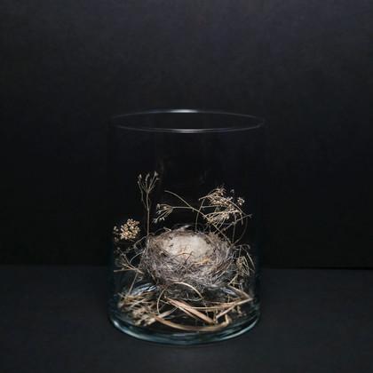 Isolation Flora