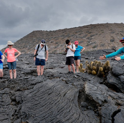 Volcano Cactus, Galápagos
