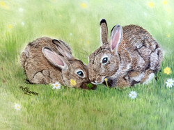 Field bunnies