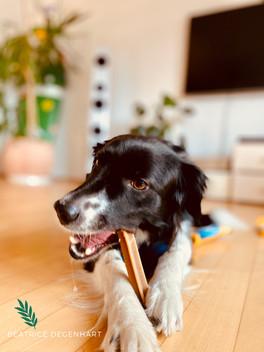 Nala empfiehlt...Hundezahnpflege