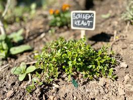 Welche Rolle spielt die Auswahl der Pflanzen in einem nachhaltigen Garten?