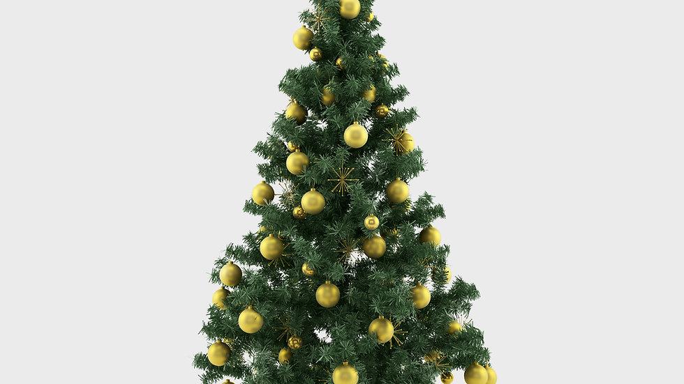 Nordmann Fir Christmas Tree - from 5ft