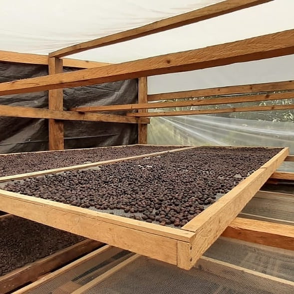 Microbeneficio seco con camas africanas