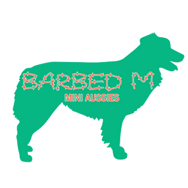 Barbed M Mini Aussies
