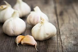 Garlic's Ancient History