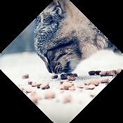 gato-comiendo.png