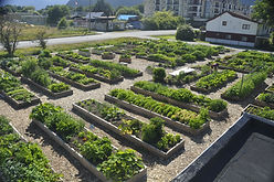 urban-community-garden-13.jpg