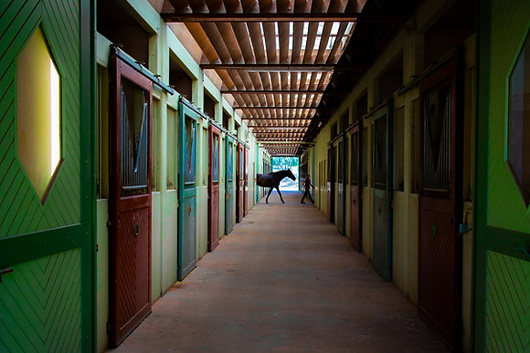 The Horse (Saumur / France)