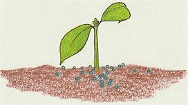 FertilizerPicture.jpeg