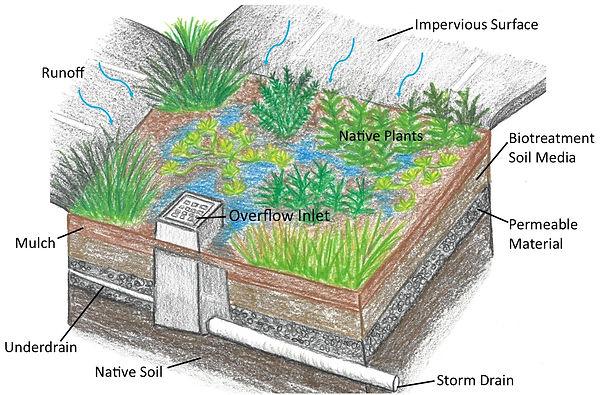 Bioretention Diagram.jpg