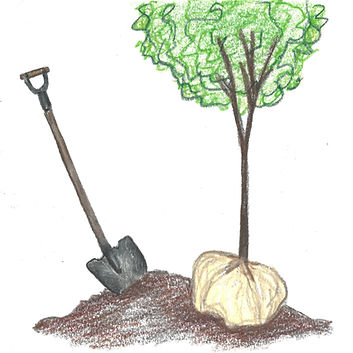 Plant a Tree .jpg