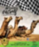 Camel flyer_gosford.jpg