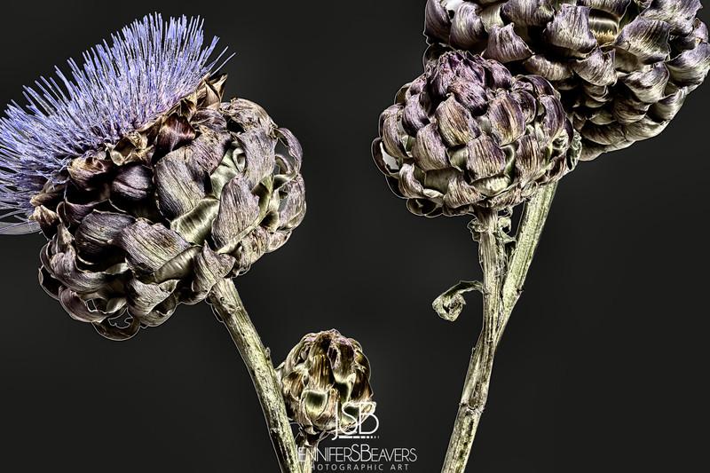 ornamental 2 s series.jpg