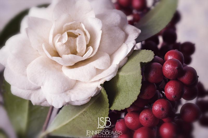 camellia_sasanqua_white.jpg