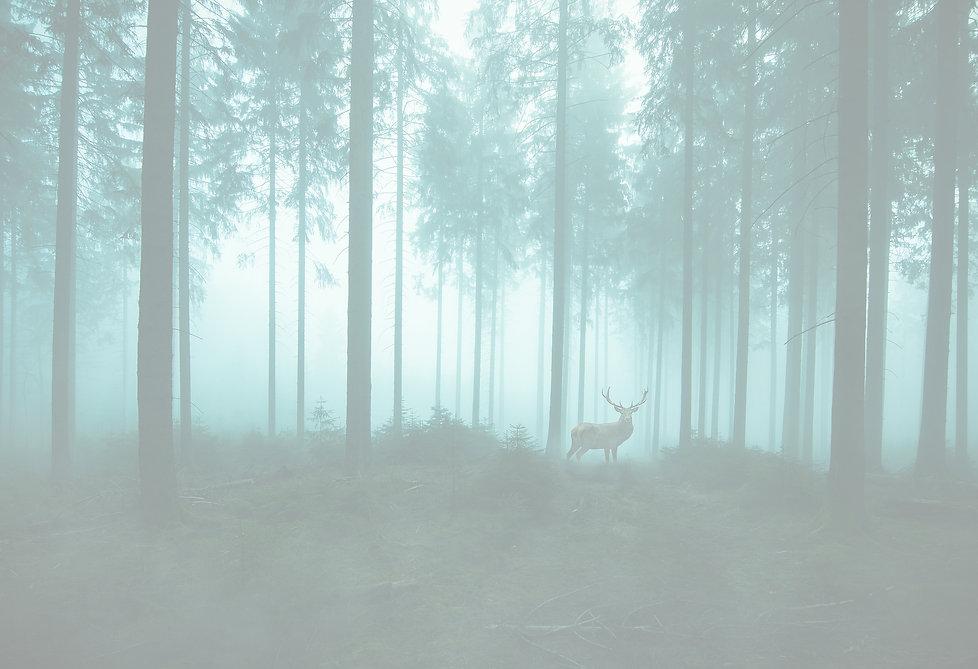forest-4175609_1920_mod.jpg