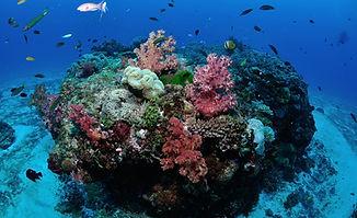 coral reef .jpg