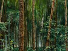 Obolecký les