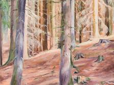 Jevanský les