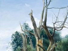 Svitavské vrby