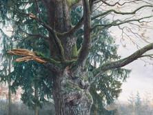 Obolecký dub