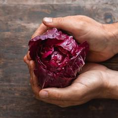 Radicchio - Cichorium Intybus 'Palla Rossa'