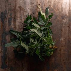 Broccolo Fiolaro di Creazzo - Brassica