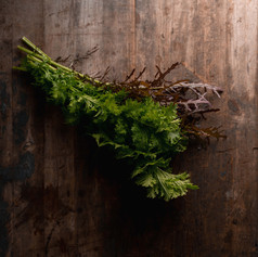 Oriental Mustard - Brassica Juncea 'Purple Frills' & 'Pisso'