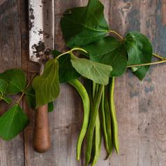 French Bean - Phaseolus Vulgaris
