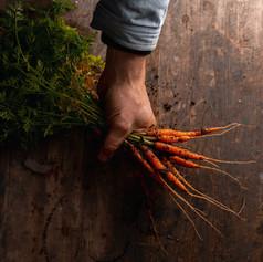 Baby Carrots - Daucus Carrota