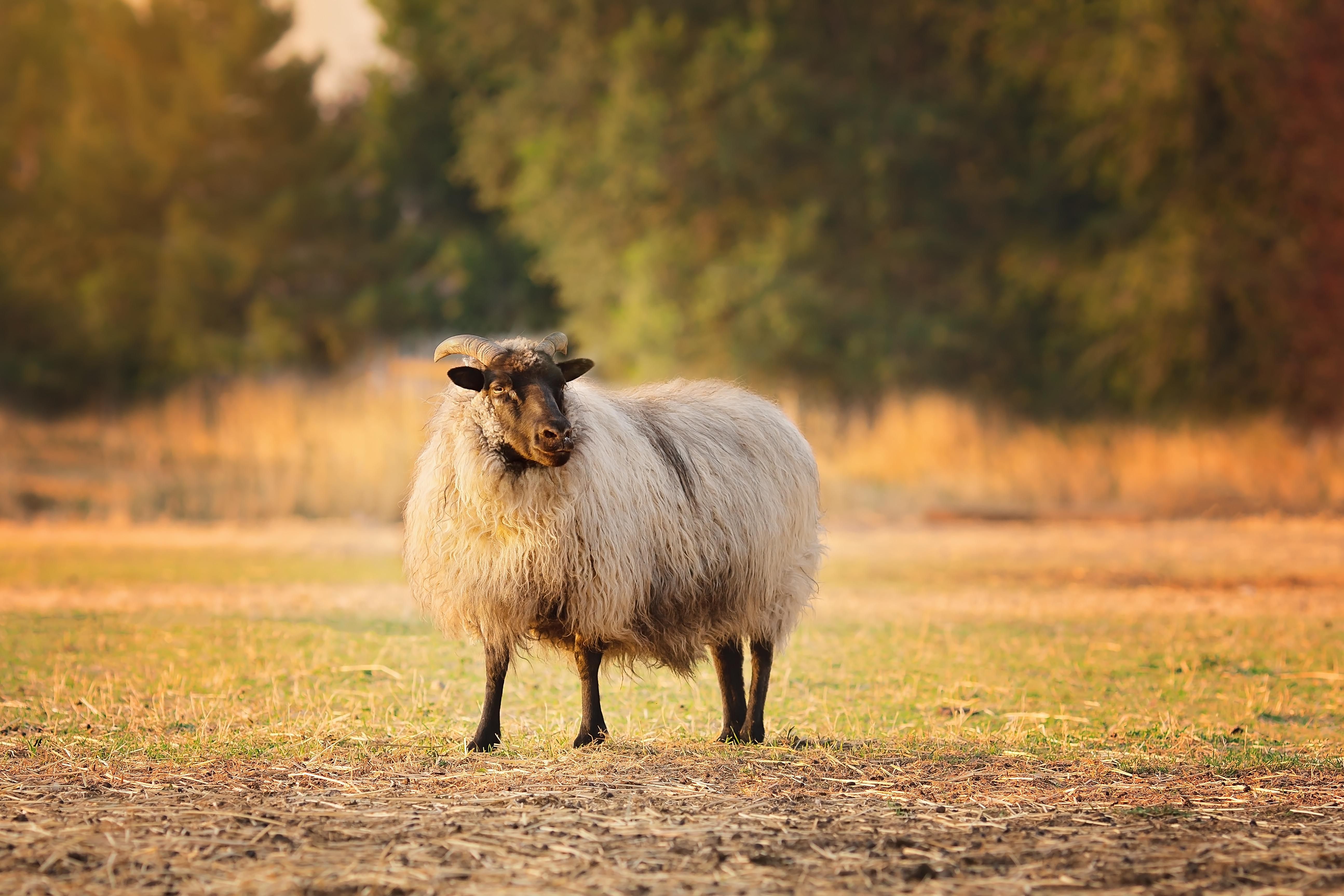 Farm Animal Photography