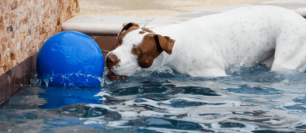 Dog playing in the swimming pool