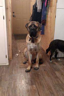 Grizz sitting 13 months