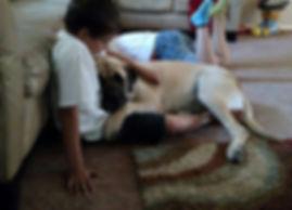 Mastiff and boy