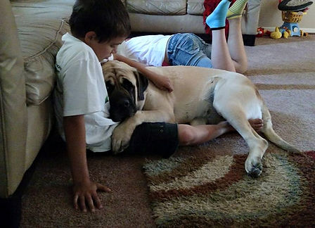 Mastiff and boy