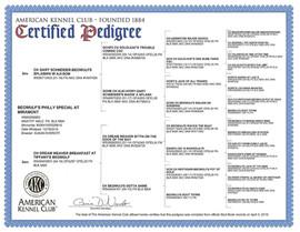 Doug AKC pedigree.jpg