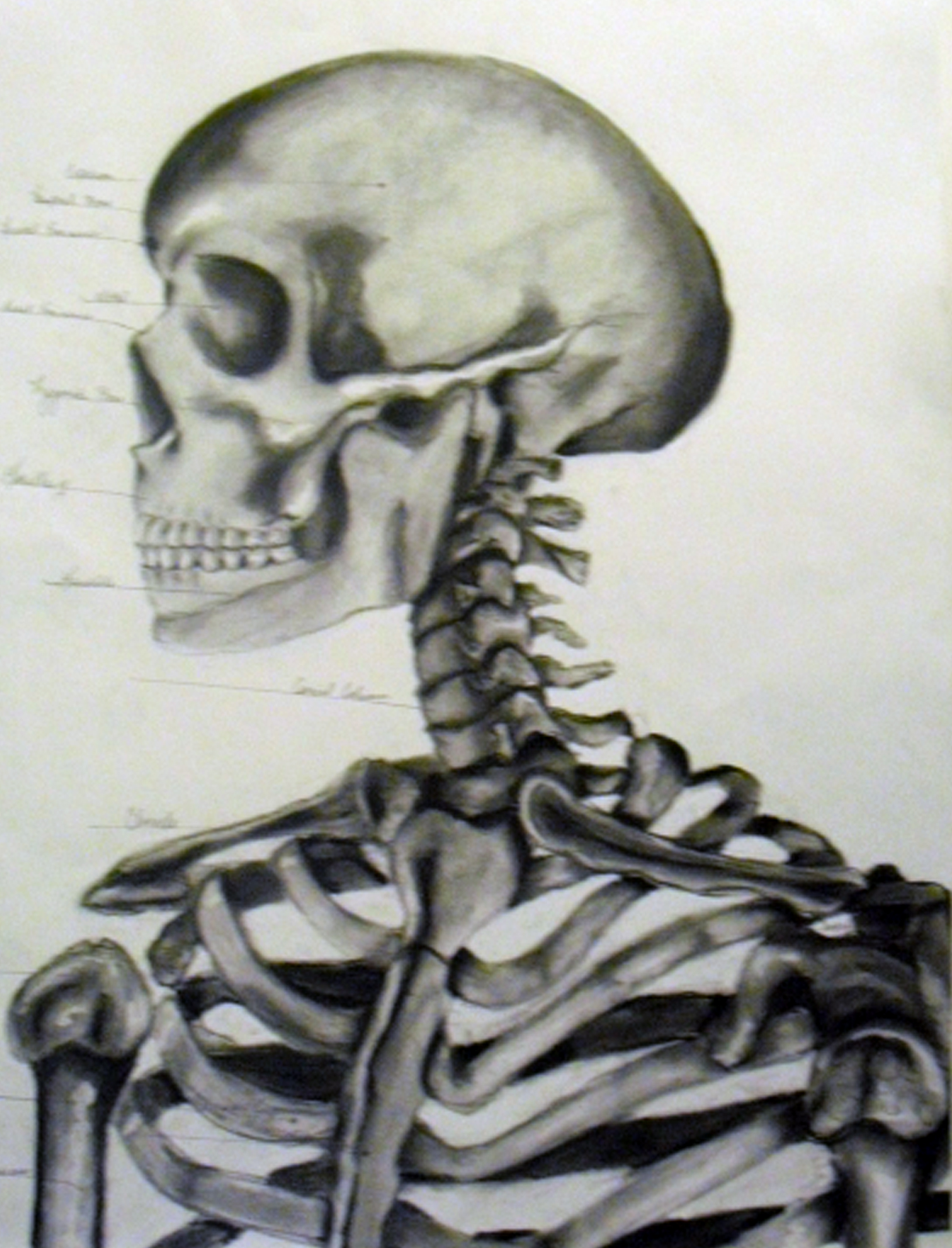 Life Drawing||Skeletor