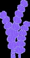 cvetjesivke.png