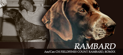 Fieldfine German Shorthaired Pointers - Am/Can CH Fieldfines Count Rambard, ROMXX