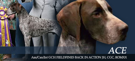 Fieldfine German Shorthaired Pointers - Am/Can/Int GCH Fieldfines Back In Action, JH, CGC, ROMXX