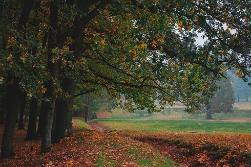 Oak forest, colorful nature autumn , fog