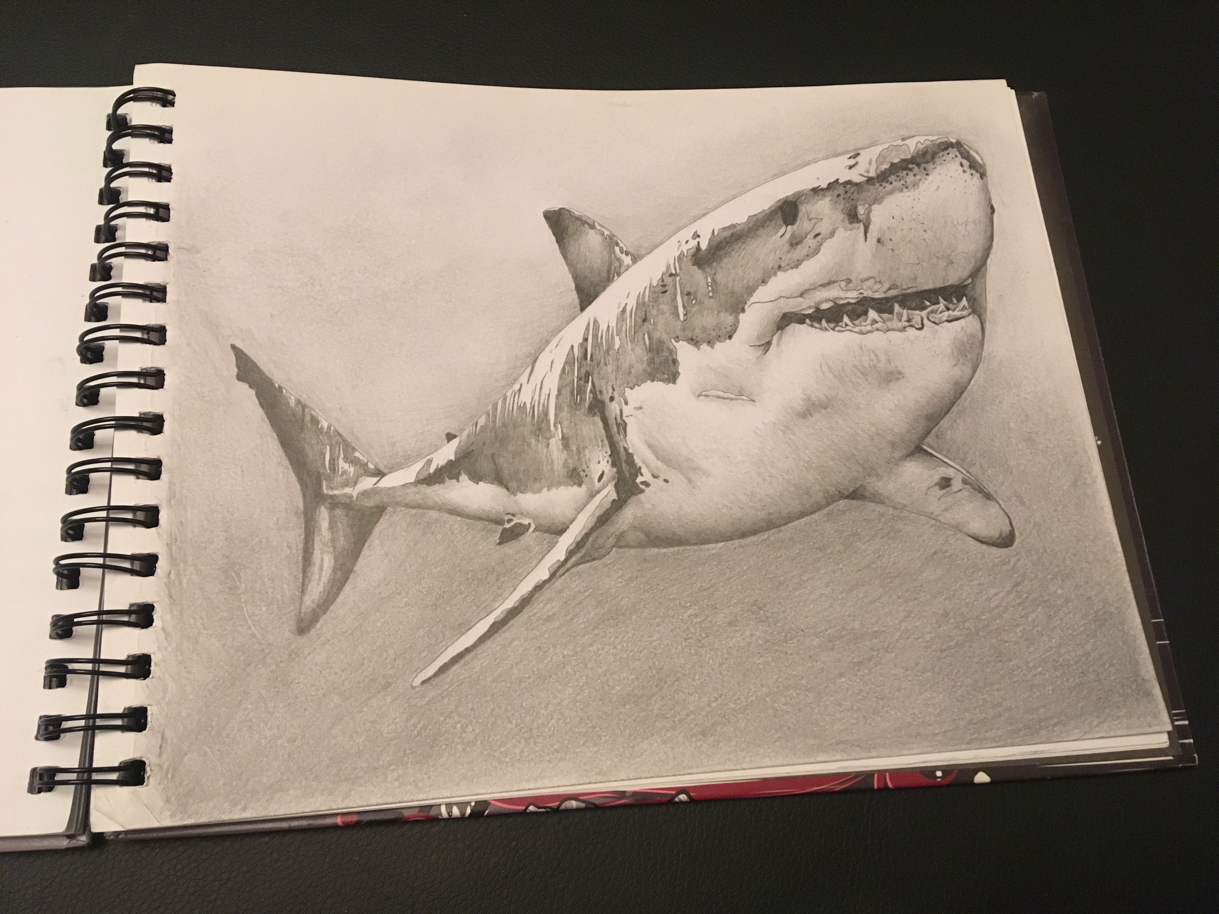 Shark portrait