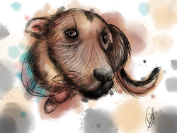 Water color dog