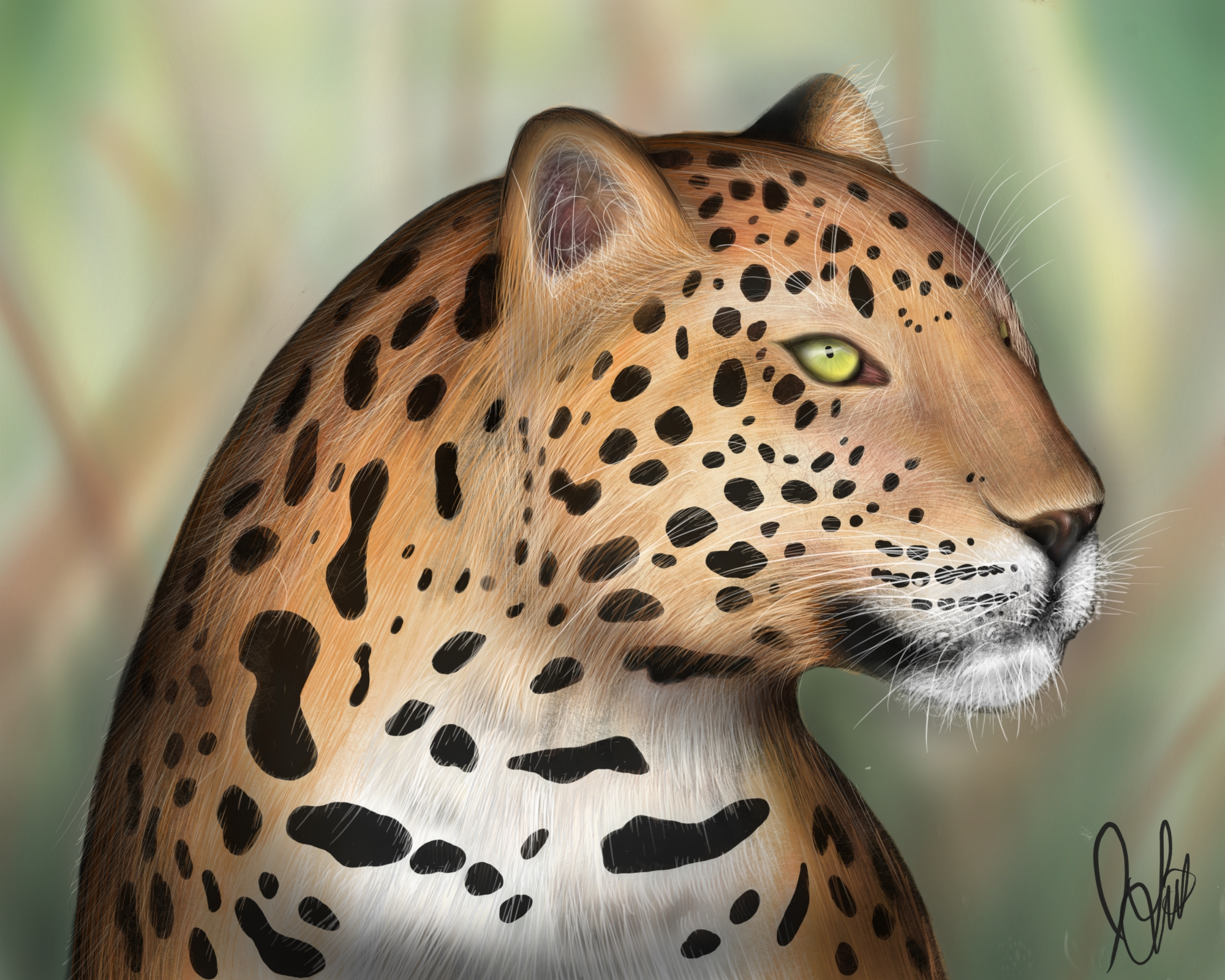 Cheetah Sketch
