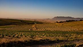 Wijn van de maand April: Lammershoek                                        Innocent - White Blend